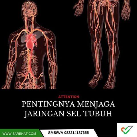 jaringan-sel-tubuh