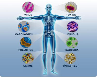 Sistem-Imunitas-Tubuh